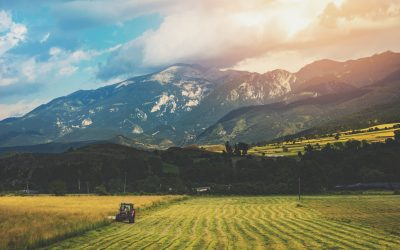 Cybèle Agrocare développe une gamme de biointrants à base de Trichoderma pour l'arboriculture, le maraichage et la viticulture.